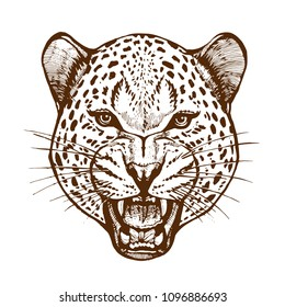 Roaring leopard head with bared teeth animal portrait ink sketch hand drawn vector illustration isolated on white background design for tattoo, coloring book page and poster