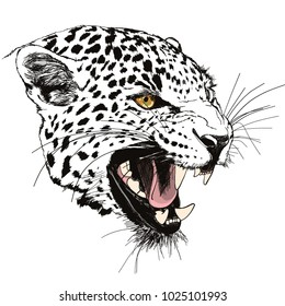 Roaring leopard head hand drawn vector illustration on white background ready for print