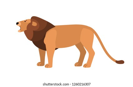 Roaring lion isolated on white background. Gorgeous wild African cat with mane. Graceful exotic predatory animal, carnivorous mammal living in Africa. Vector illustration in flat cartoon style.