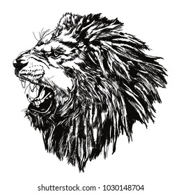 A roaring lion side look hand drawn vector illustration black and white