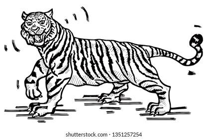 A roaring tiger. Hand drawn vector illustration.