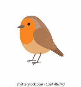 Robin bird. Vector illustration isolated on white background.