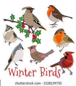 Robin cardinal titmouse waxwing winter birds and holly berries wildlife vector set illustration with calligraphy design element Christmas