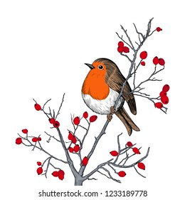 Robin. Hand-drawn vector background with Robin and branches with berries. Christmas  design illustration.  Engraved style elements . Vintage color sketch.
