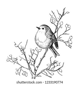 Robin. Hand-drawn vector background with Robin and branches with berries. Christmas  design illustration.  Engraved style elements . Vintage monochrome sketch.