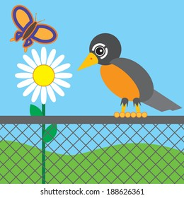 Robin on chain link fence