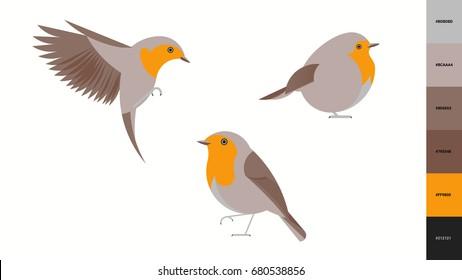 robin vector illustration