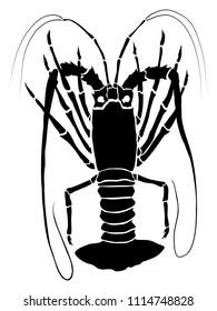 Rock lobster illustration