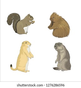 rodents mice squirrels gophers otter