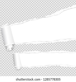 Rolled and ripped squared white notebook paper sheet for text. Vector illustration