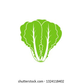 Romaine lettuce. Isolated lettuce on white background. Logo