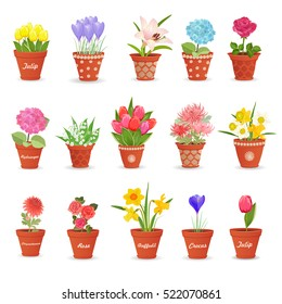 romantic collection of cute flowerpots with flowers for your design