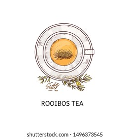 Rooibos tea in glass cup drawing seen from top overhead view, hot herbal orange color drink in teacup and plate set garnished with plant twigs. Isolated hand drawn vector illustration