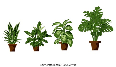 room plant on white background