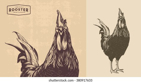 rooster, cock cockerel vintage illustration, line art