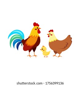 Rooster cock with hen and chick isolated on white background. Cute farm birds family flat design cartoon style vector illustration. Funny poultry chicken family.