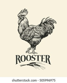 Rooster. Cock Illustration in Vintage engraving style. Grunge label, sticker for the farms and manufacturing depicting roster. Grunge label for the chicken product. Farm painting. Cockerel. Vector