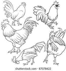 Rooster Collection - Black outline illustration, vector