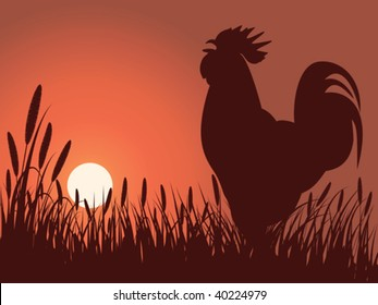 rooster greeting sunrise on a lawn