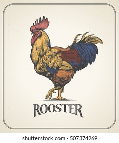 Rooster. Illustration of the cock in Vintage engraving style. Rooster colorful produce label. Sticker image for the farms and manufacturing depicting roster. Grunge label for the chicken product.