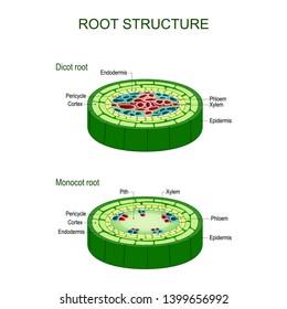 Imágenes, fotos de stock y vectores sobre Roots of Education