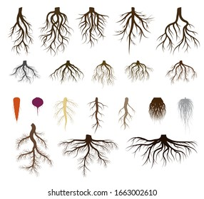 Root system set vector illustrations. Taproot and fibrous rooted brown silhouettes of various plants, trees, vegetables below ground level. Underground branched root design isolated icons on white