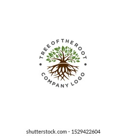 root of the tree logo. natural tree logo template