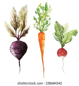 root vegetable, watercolor, vegetables