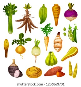 Root vegetables or veggie tuber icons. Vector sweet potato, radish or turnip and legume bread beans, natural jicama and cassava, manioc or celery and rutabaga, caigua and yam, little corn