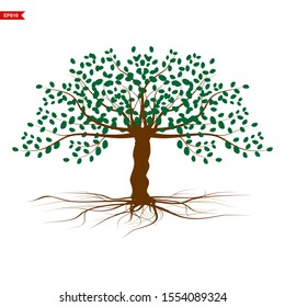 rooted mangrove plants with green leaves, white background, vector