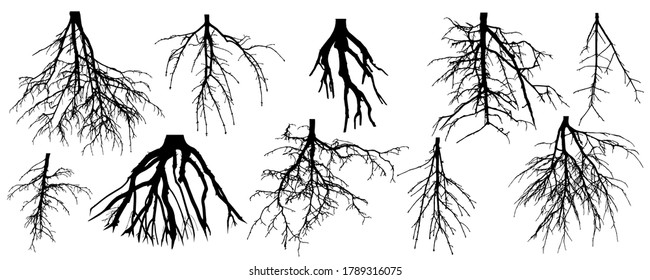 Roots of different trees, set. Rootage. Vector illustration.