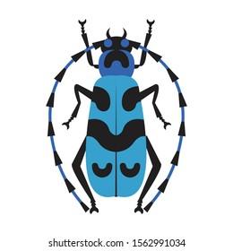 Rosalia batesi longhorn black-blue bug icon. Exotic beetle with long antennae and legs. Rosalia alpina entomology unusual insect illustration.