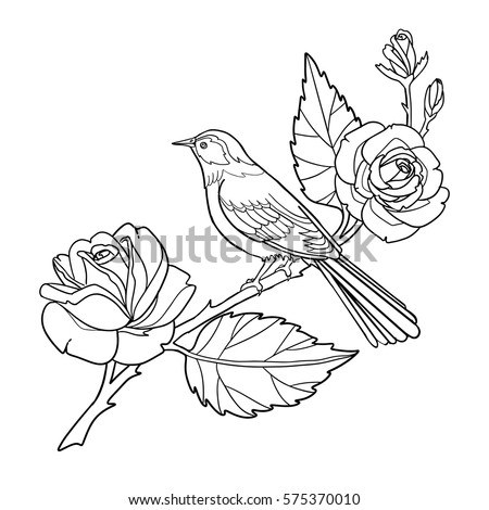 Rose Bird Coloring Book Page Hand Stock Vector Royalty Free - Bird-coloring-book