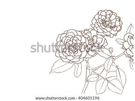 rose bush drawing flower stock vector royalty free 404601196