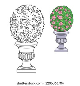 Rose bush with flowers growing in a curly garden vase color and outlined for coloring