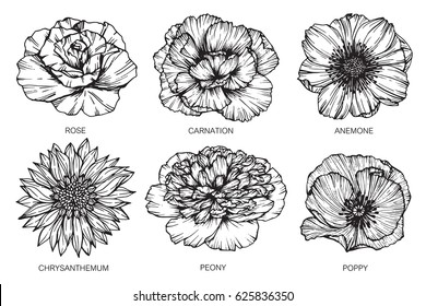 Rose, Carnation, Anemone, Chrysanthemum, Peony and Poppy flowers drawing and sketch with line-art on white backgrounds.