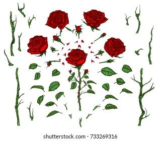 Rose elements set. Hand drawn vector illustration of red rose with stems, leaves, petals,thorns and buds.