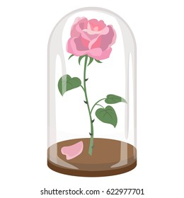 Rose in a flask of glass on the white background. Vector illustration.