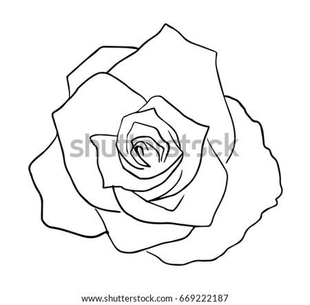 Rose Flower Black White Vector Sketch Stock Vector Royalty Free