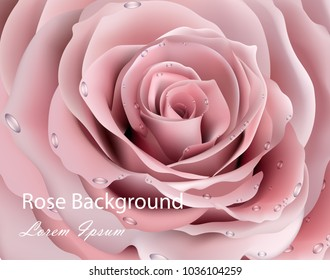Rose flower close up Vector realistic background. 3d illustration delicate pink colors