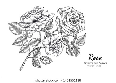 Rose flower drawing illustration. Black and white with line art on white backgrounds.