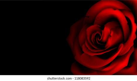 Rose flower isolated on black/Rose