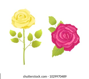 Rose flower in pink and yellow color, on stem with green leaves vector illustrations in realistic design. Buds in blossom, decorative floral elements