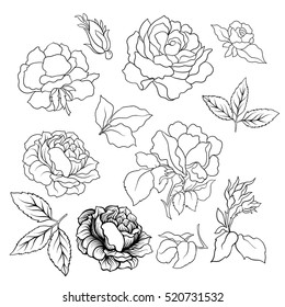 Rose flower set. Vector illustration. Outline drawing