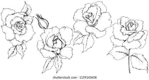 Rose flower in a vector style isolated. Full name of the plant: rose. Vector flower for background, texture, wrapper pattern, frame or border.