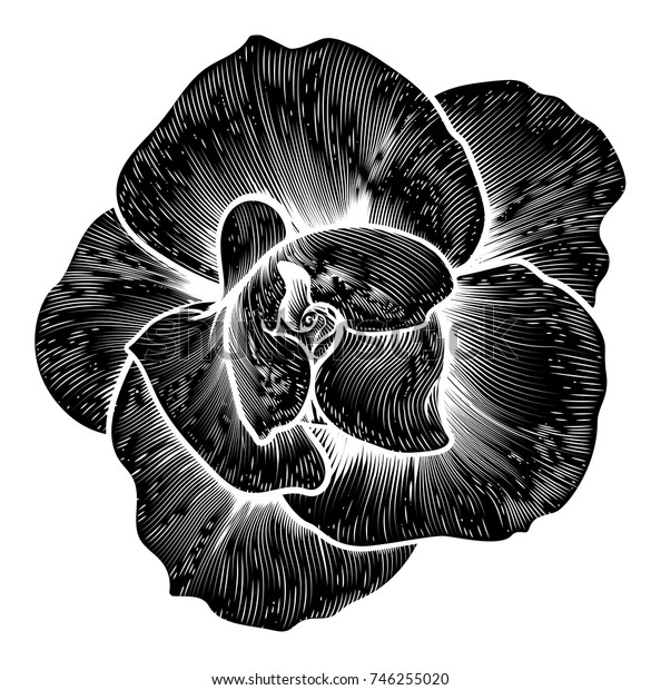 A rose flower woodcut in a vintage retro engraved etching style