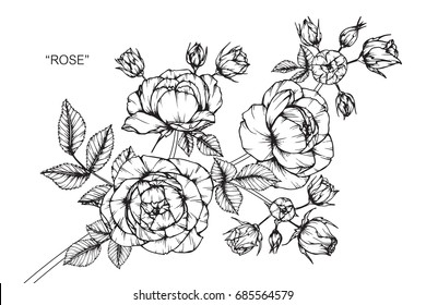 Rose flowers by hand drawing and sketch with line-art on white backgrounds.