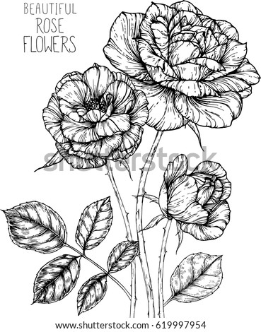 Rose Flowers Drawing Illustration Vector Clipart Stock Vector