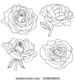 62074 Rose Rose Outline Images Royalty Free Stock Photos On