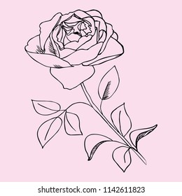 Rose, a hand-drawn on a light background